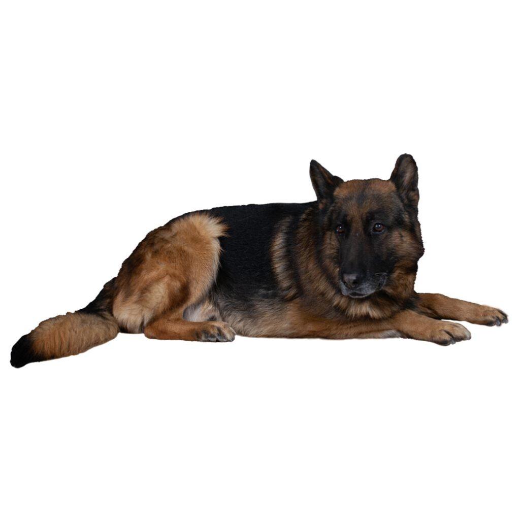 Εκπαίδευση σκύλου Θεσσαλονίκη